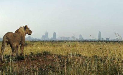 Day in Nairobi National Park
