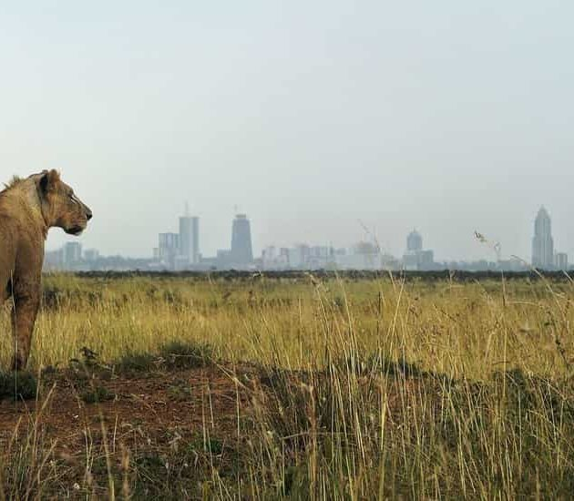 Day in Nairobi National Park
