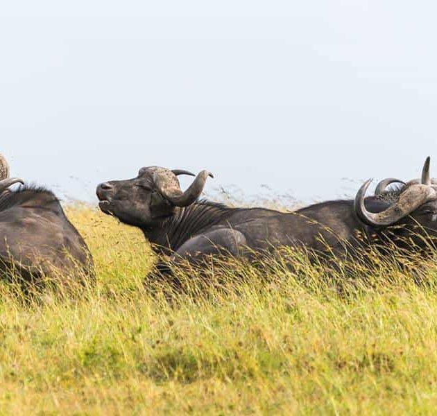 Tsavo Amboseli & Mara