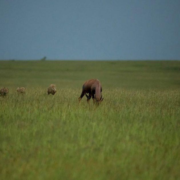 5Days Amboseli Naivasha & Mara