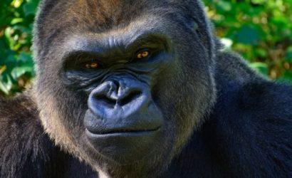 3Days Gorilla Trekking in Rwanda