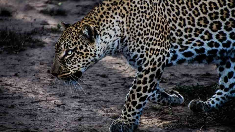 Safaris and adventures