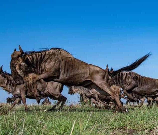3Days air Safari Mara