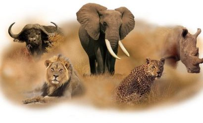 The Big Five Animals