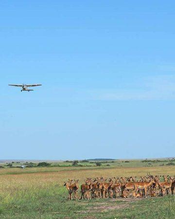 Air Safaris